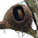 Closed nests