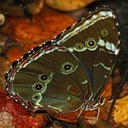Colours of the nature: Butterflies