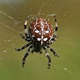 Invertebrates, others - Arachnids